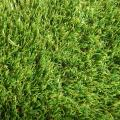 Elite Lawn image