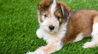 Choosing the Best Artificial Turf for Your Dog