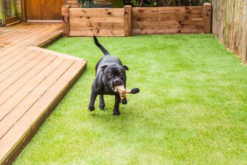 artificial-grass-pets
