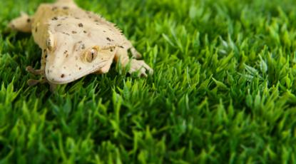 Artificial Grass for Exotic Pets