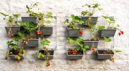 10 Small Garden Design Ideas to Inspire You