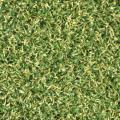 Golf Prograss- Green image
