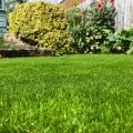 Comfort Lawn image