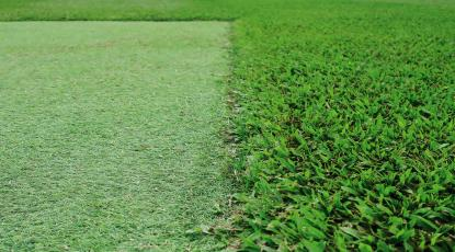 Can You Lay Artificial Grass Next to Real Turf?