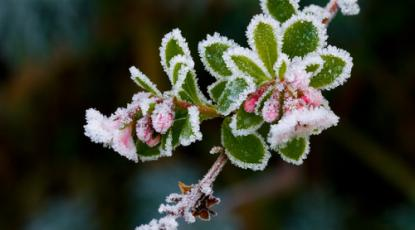 How to Keep Your Garden Picture Perfect During Winter